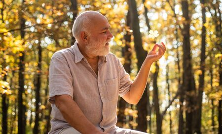 See beauty in simple things. Old bearded man collect leaves. Happy man enjoy autumn nature. Bearded grandfather relaxing in forest. Pensioner hiking in forest on sunny autumn day. Keep cheerfulness.