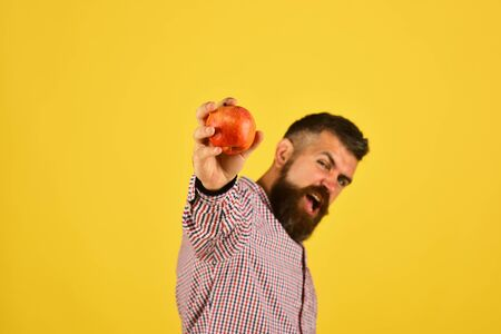 Guy presents homegrown harvest. Man with beard holds red apple 版權商用圖片