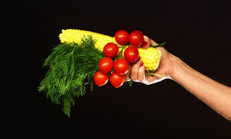 Autumn maize harvest idea. Female hand holds vegetables and bunch of dill isolated on black background. Composition of corn cob, cherry tomatoes and green plant. Farming and fall crops concept.