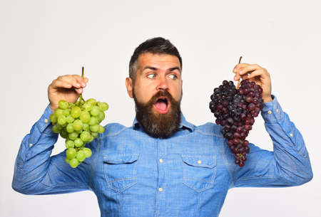 Winegrower with surprised face holds clusters of grapes Foto de archivo