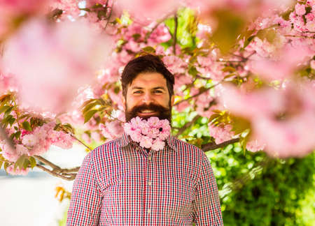 Walk in park. April events. Natural beauty surrounds me. Handsome bearded man outdoors. Happy easter. Hipster in cherry bloom. Man in sakura blossom. Pink tender bloom. Weekend in garden concept