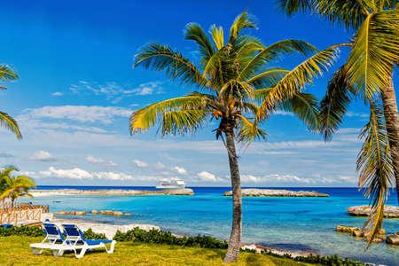 green palm tree on sunny beach