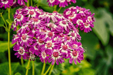 beautiful flower bouquet violet color with green leaves in garden