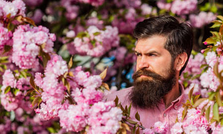 Join my spring. Natural beauty. Handsome bearded man outdoors. Hipster in cherry bloom. Man in sakura blossom. Spring pink tender flowers. Weekend in garden concept. April events. Spring holidays