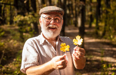 Botanist examine herbs. Old man collect leaves. Bearded grandfather in forest. Man enjoy autumn nature. Curiosity to botany. Explore world around. Pensioner hiking in forest on sunny autumn day