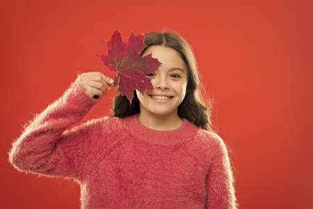 Small girl smiling with maple leaf. Maple syrup is often used as condiment for pancakes waffles oatmeal or porridge. Ingredient in baking and sweetener. Maple syrup. Little child hold maple leaf