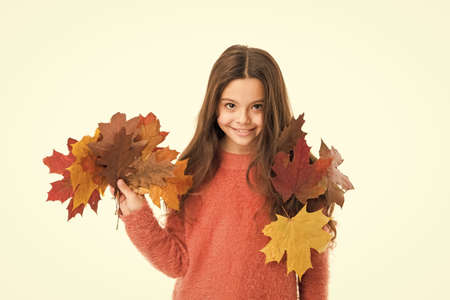 Girl child cozy sweater. Hygge concept. Autumn pleasures. Feeling cozy this days. Cozy days. Childhood happiness. Fall season. Kid with fallen leaves white background. Happy small girl maple leaves Stock Photo