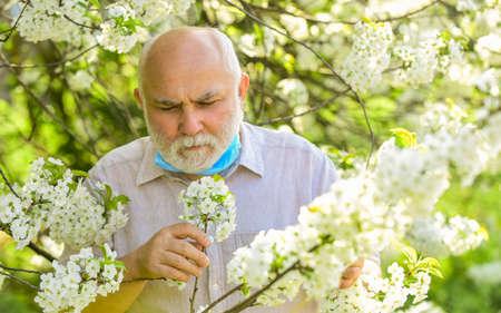 It is spring time. spring enjoyment. restricted sakura park. park is closed for quarantine due to coronavirus. senior man take off respirator mask. sakura blossom tree in park. coronavirus covid19