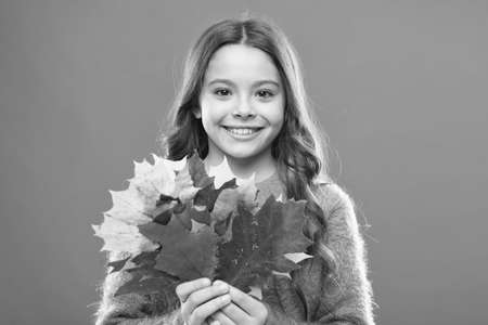 Collecting leaves. Natural treasures. Color pigment. Changes in nature. Happy little girl with maple leaves. Small child hold autumn leaves. Cute happy smiling kid playing with leaves. Botany concept