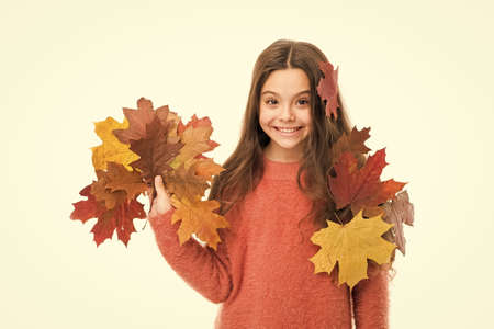 Collecting autumn leaves. Nature changing color. Seasons concept. Fall season. Kid with fallen leaves white background. Happy small girl maple leaves. Autumn pleasures. Cozy days. Childhood happiness Stock fotó