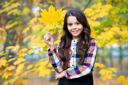 smiling child with yellow maple leaves, fall time Stock fotó
