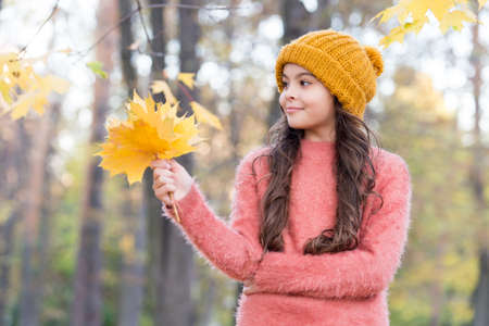 smiling teen girl in knitted hat and sweater hold yellow maple leaves in forest of park in autumn season with warm weather, fall 免版税图像