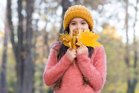 smiling teen girl in knitted hat and sweater hold yellow maple leaves in forest of park in autumn season with warm weather, childhood Stockfoto