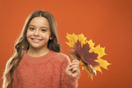 Collecting leaves. Cute happy smiling kid playing with leaves. Natural treasures. Color pigment. Changes in nature. Happy little girl with maple leaves. Small child hold autumn leaves. Botany concept