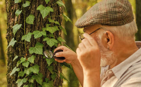 Examine with magnifying glass. Magnifying glass selective focus. Old man look at leaves with magnifying glass. Exploring with magnifying glass. Magnification and investigation. Nature observation