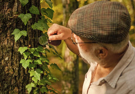 Old man look at leaves with magnifying glass. Elderly man examine tree leaves with magnifying glass. Save trees, save nature. Environment day. Nature study. Senior person do forest research