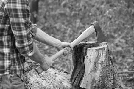 Cutting some firewood. Chopping wood. Wood chopper in male hands. Lumbermans equipment. Forestry logging. Timber harvesting. Summer nature