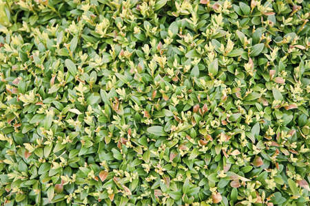 Go green and natural. Green plant grow in field. Green leaves natural background. Spring or summer nature. Green growth. Planting and growing. Farming and agriculture. Ecology and environment