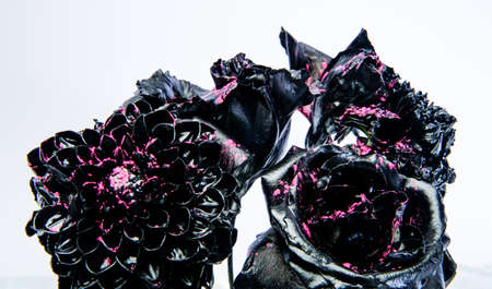 floristics business. Glamour. silver black chrysanthemum and rose flower. vintage retro. wealth and richness. metallized antique decor. grunge beauty. Isolated on white. Array of Color.