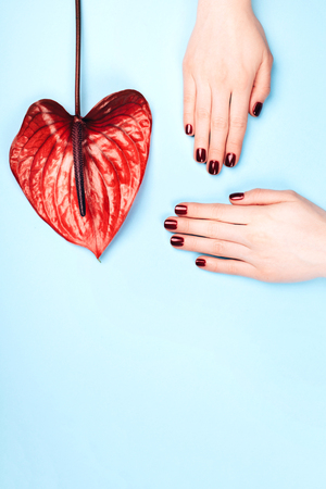 Red manicure and flower - Anturium bordo. Concept of stylish manicure. Flat lay style.