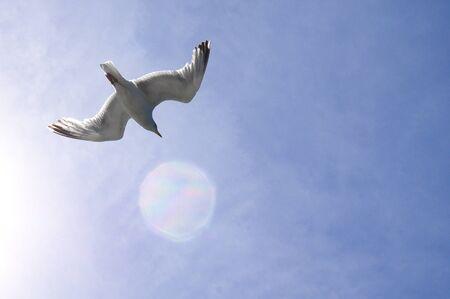 Flying gulls from below against the blue sky Standard-Bild