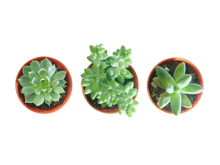 Top view of small three pot isolated