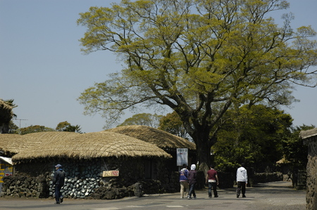 folk village: seongeup folk village. jeju. sth korea Editorial