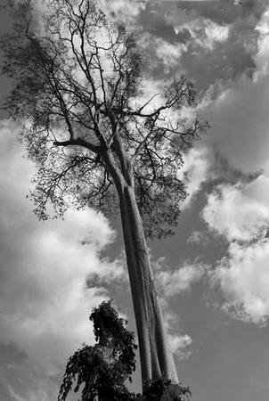 insular: The tree stood lonely and nothing is beside it except the sky.
