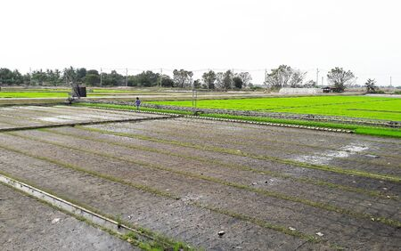 granger: Landscape of rice field has completed cultivate rice filed and has green color. Another side, the land has only soil without rice, farmer prepares it for next agriculture period.