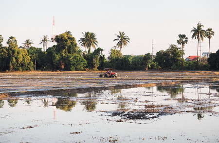 granger: Thai farmer is driving red tractor to dig the land for next cultivation period. White kingfishers are around field  so that seek food. Trees, coconut palms and buildings are surrounding rice filed. Stock Photo