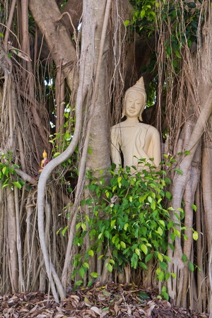 budda traped in the tree roots, Nan Thailand Stock Photo