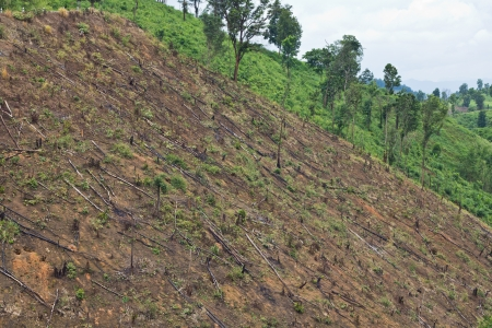 squatter: Forest cut down