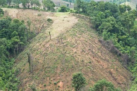 deforestacion: Bosque cortado Foto de archivo