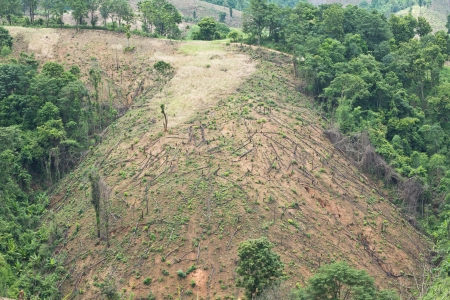 environmentalism: Forest cut down