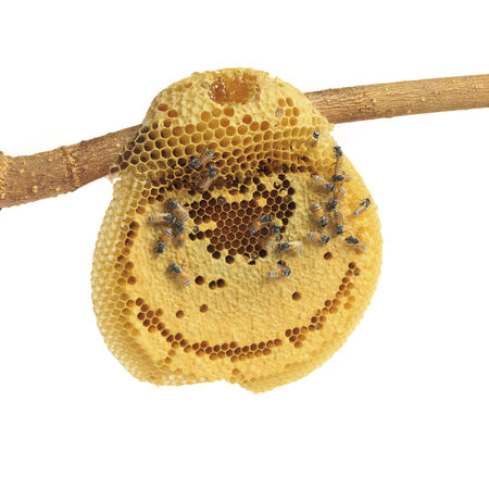 honeycomb with honey and bee, isolated on white background