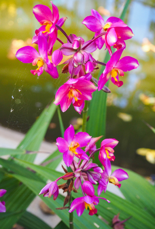 Small purple flower orchid