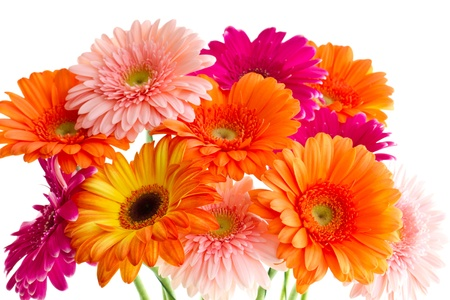 The bouquet of bright gerbera on a white background Stock Photo - 12910333