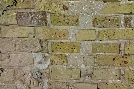 black mold: Brick wall