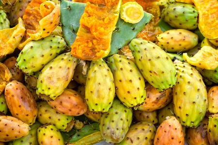 Prickly pear cactus closeup fruits in green,yellow and orange colours.