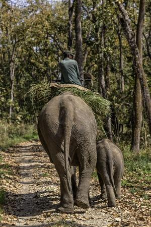 chitin: Man riding elephant in Chitin National park.