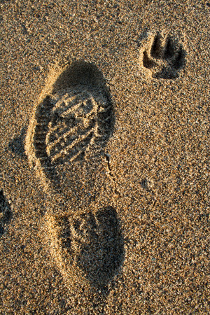 Human and dog footprint in sea sand photo