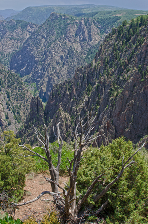 Looking down into the chasm of the Black Canyon of the Gunnison National Park - here the Gunnison River cut through Precambrian rock over a billion years old. One can see metamorphic rocks like gneiss and schist, along with pink pegmatite intrusions.  The