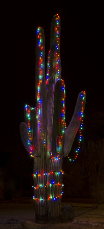 a giant saguaro cactus is decorated in christmas lights for the holiday season stock photo