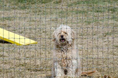 A cute mixed breed adopted puppy barks from behind a fence, just waiting to play! 写真素材
