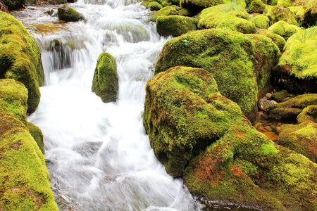 crick: Ruscello di montagna con muschi verdi e streaming offuscata
