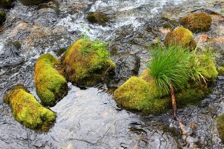 crick: Rocce ricoperte di muschio a Mountain Brook
