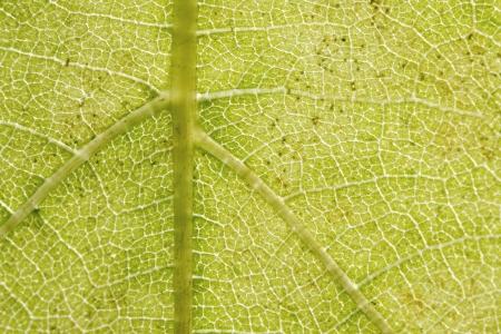 Primer plano de la estructura de la hoja verde Foto de archivo - 15628483