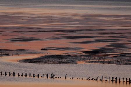 wadden: Danish Wadden Sea at sunset