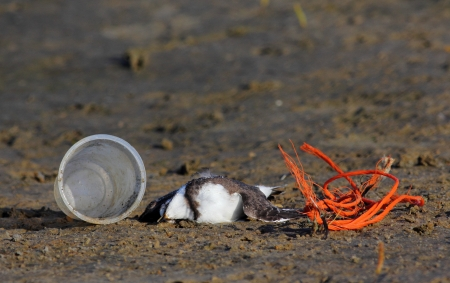 Dead sea bird on sandy coast with debrits and pollution Stock Photo