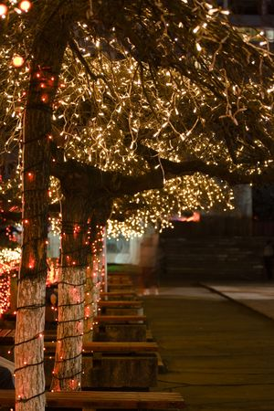 Trees in a plaza adorned with holiday lights